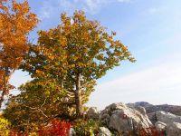 Biljni-svijet-Medvjeđa-ljeska-Ubaljska-planina